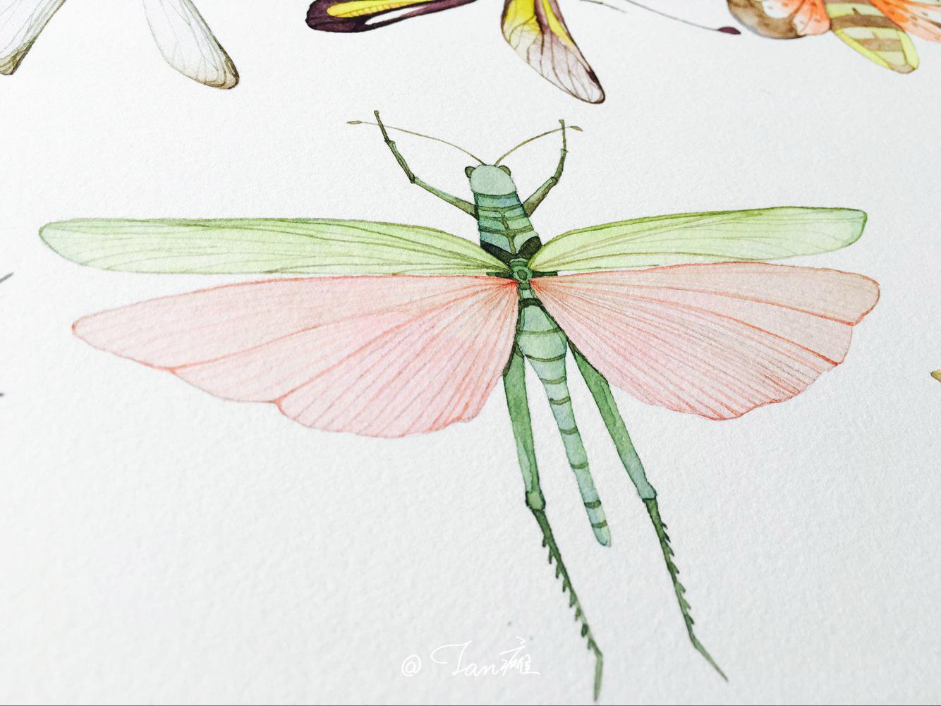《昆虫》水彩手绘插画
