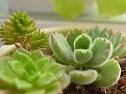 我和我的植物(多肉)