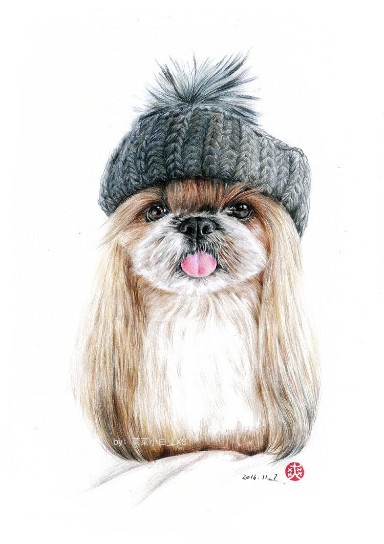 彩铅手绘—戴帽子的狗狗