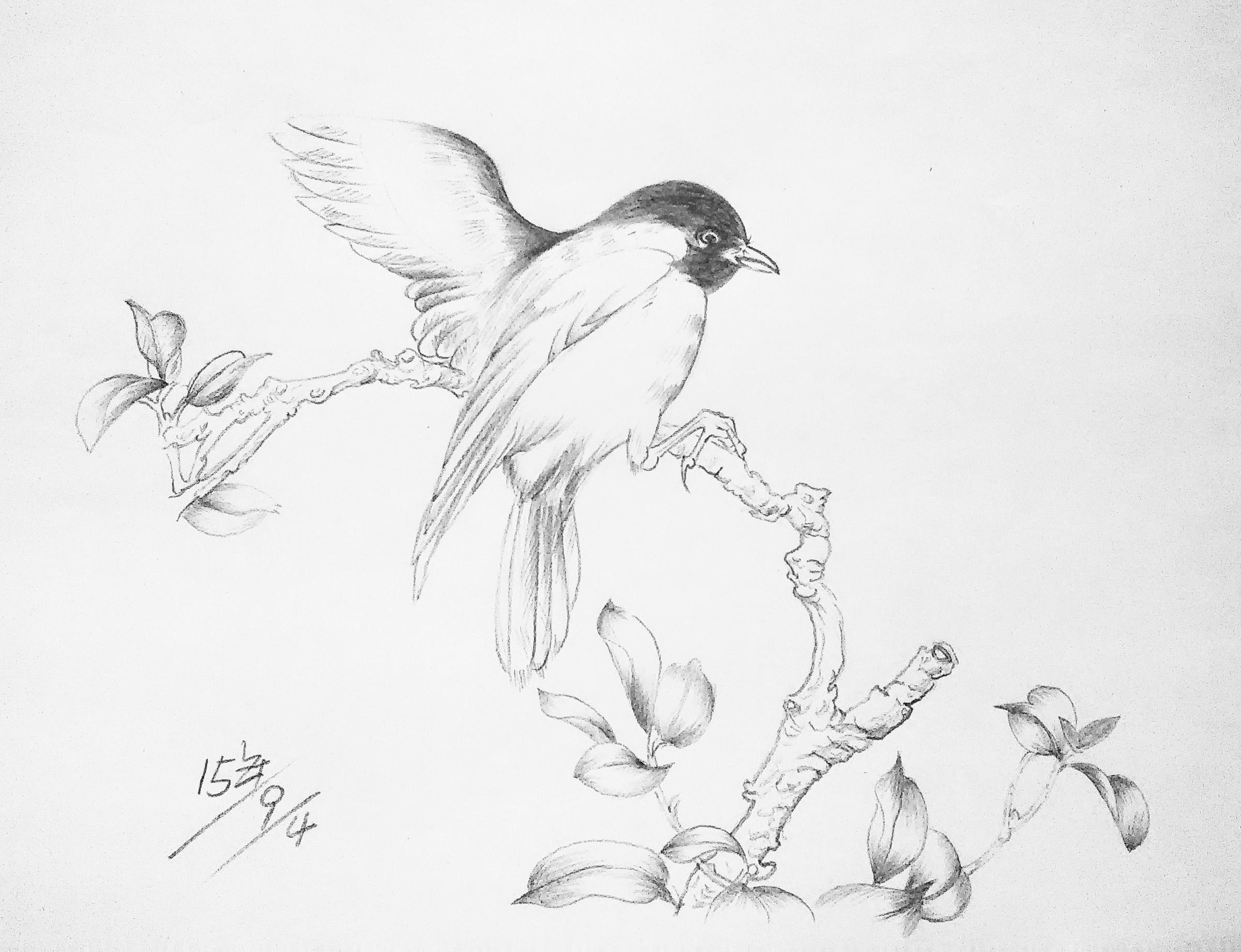 铅笔画 花鸟