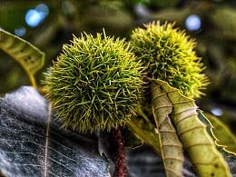 生活之美,板栗、向日葵、野果
