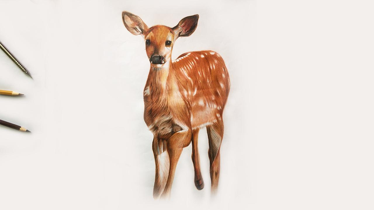 彩铅手绘头上开花的鹿