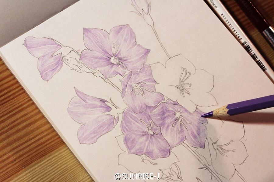原创作品:原创彩铅手绘花卉植物