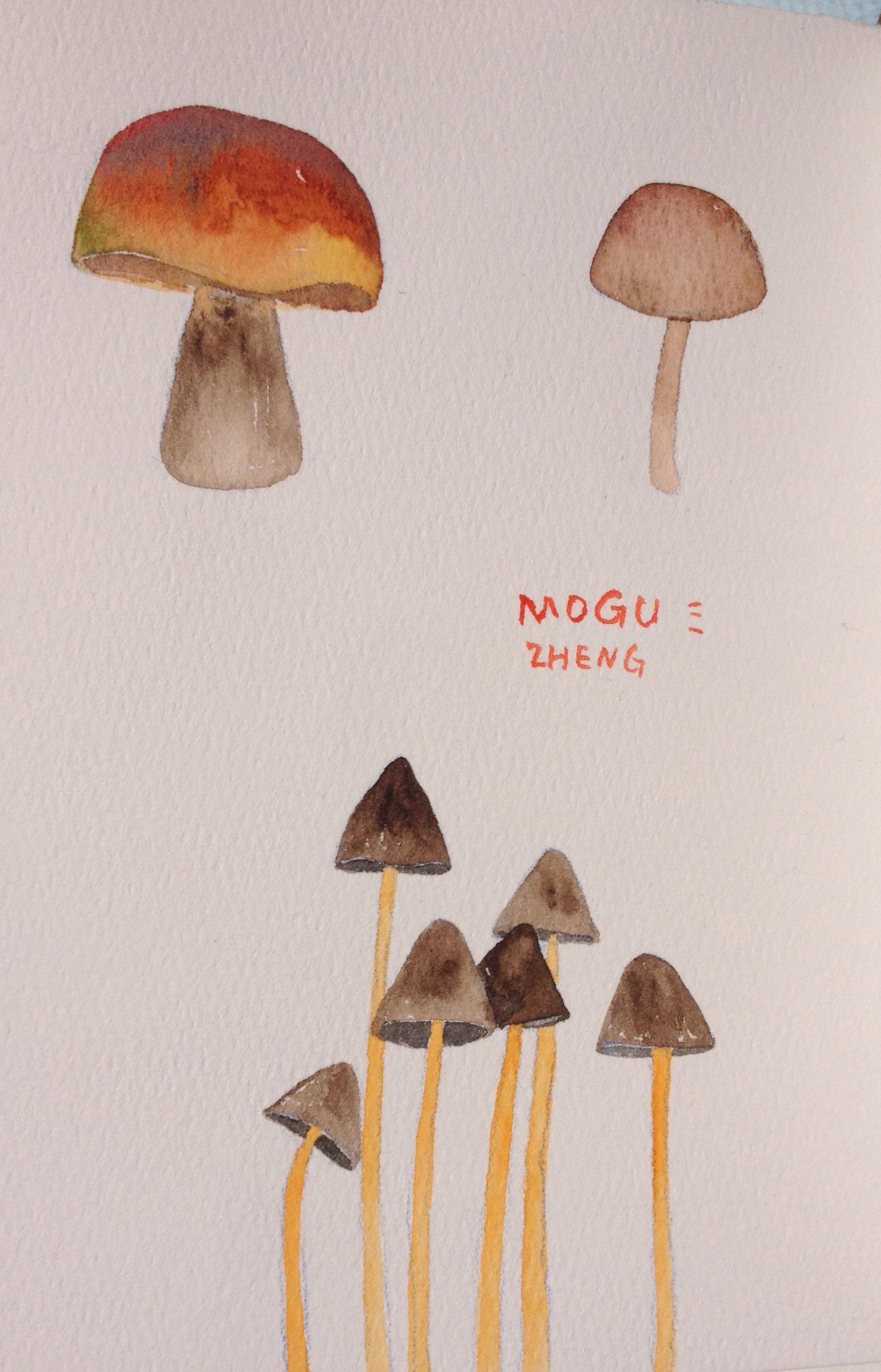 水彩·蘑菇