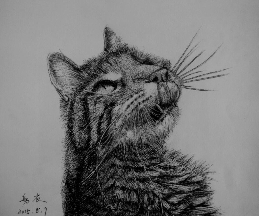 硬笔手绘,《猫物语系列》