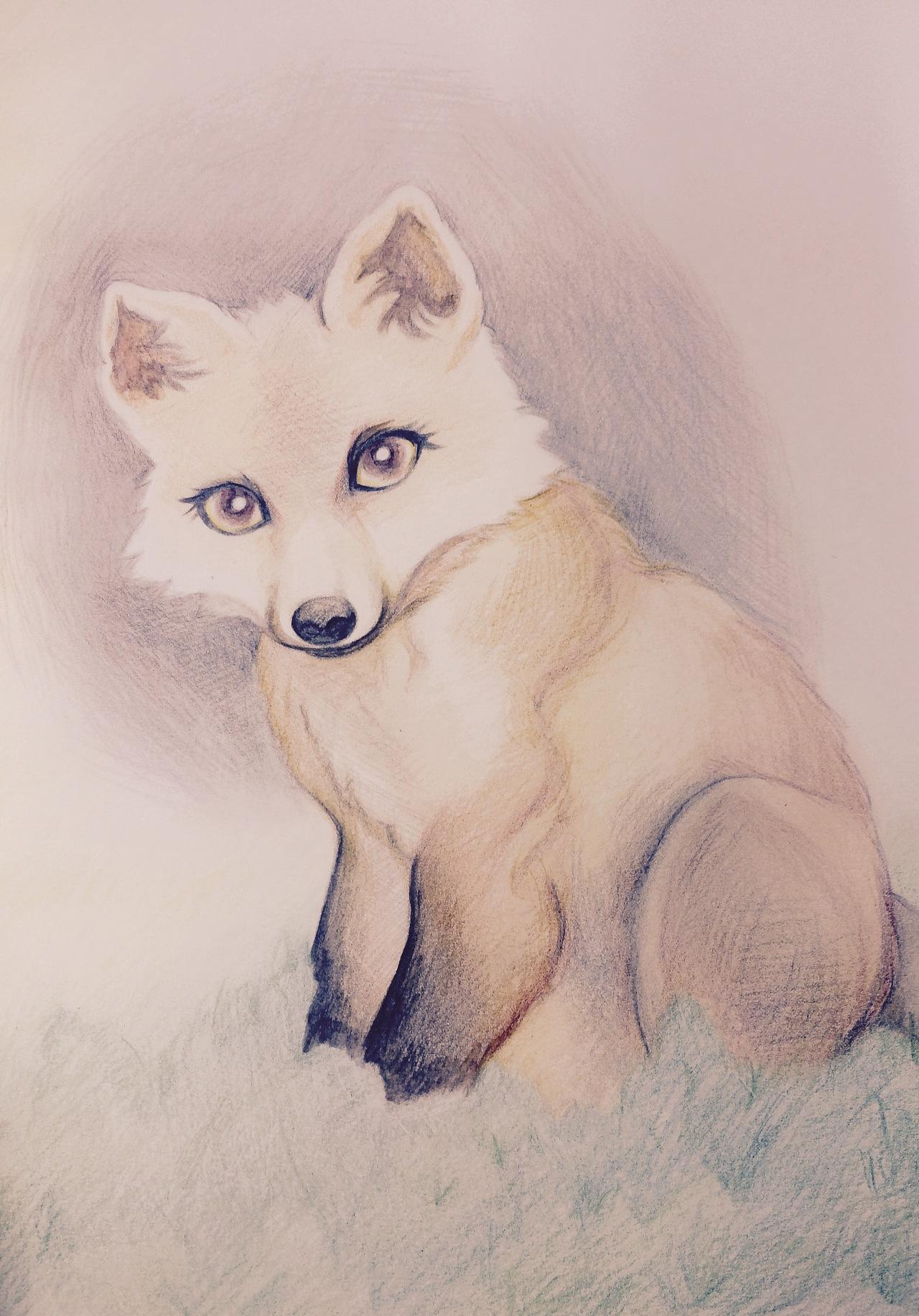 可爱的狐狸 彩铅许久不用 练一下