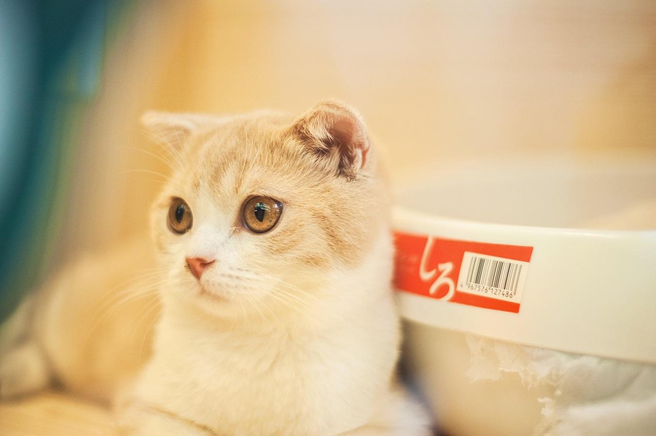 宠物猫 口袋手绘