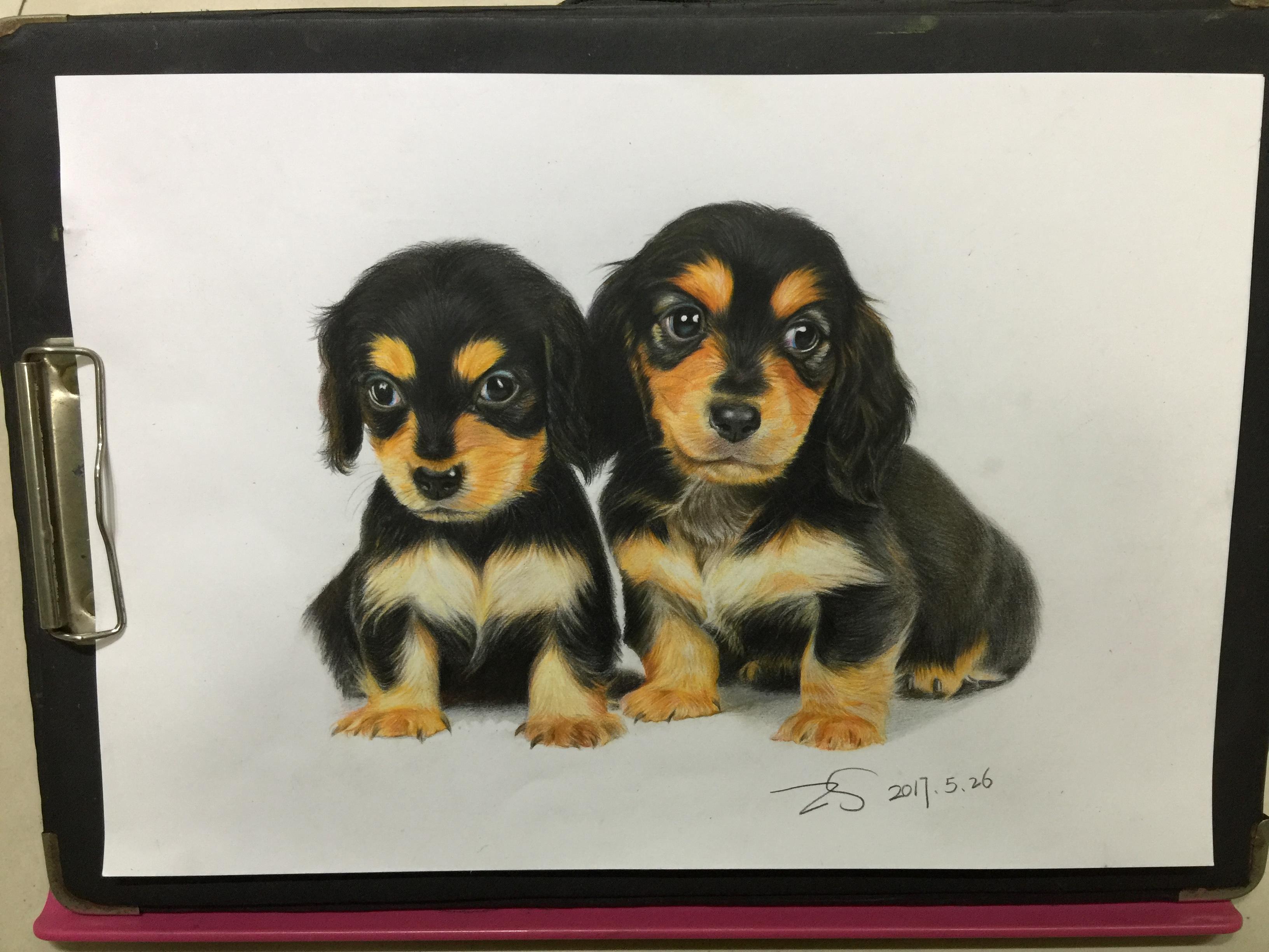 彩铅纯手绘小黑狗