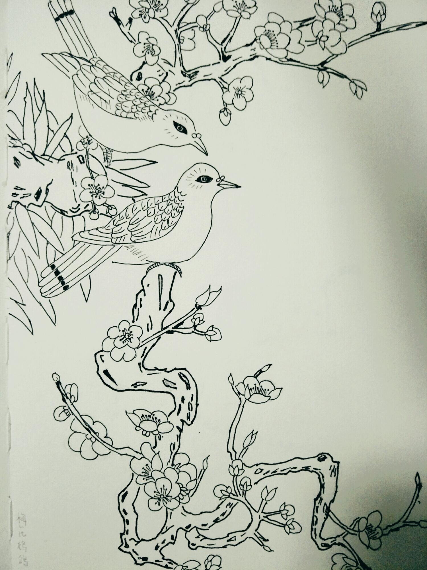 花鸟简笔画图片大全