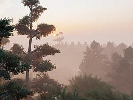 Rainforest 雨林 动画短片