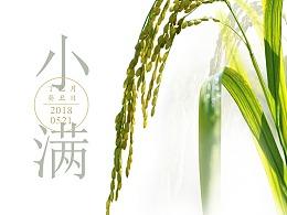 大洲金丝燕节气海报