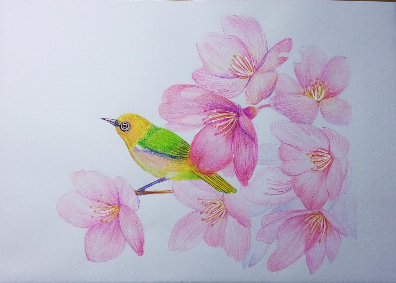 彩铅手绘粉色树