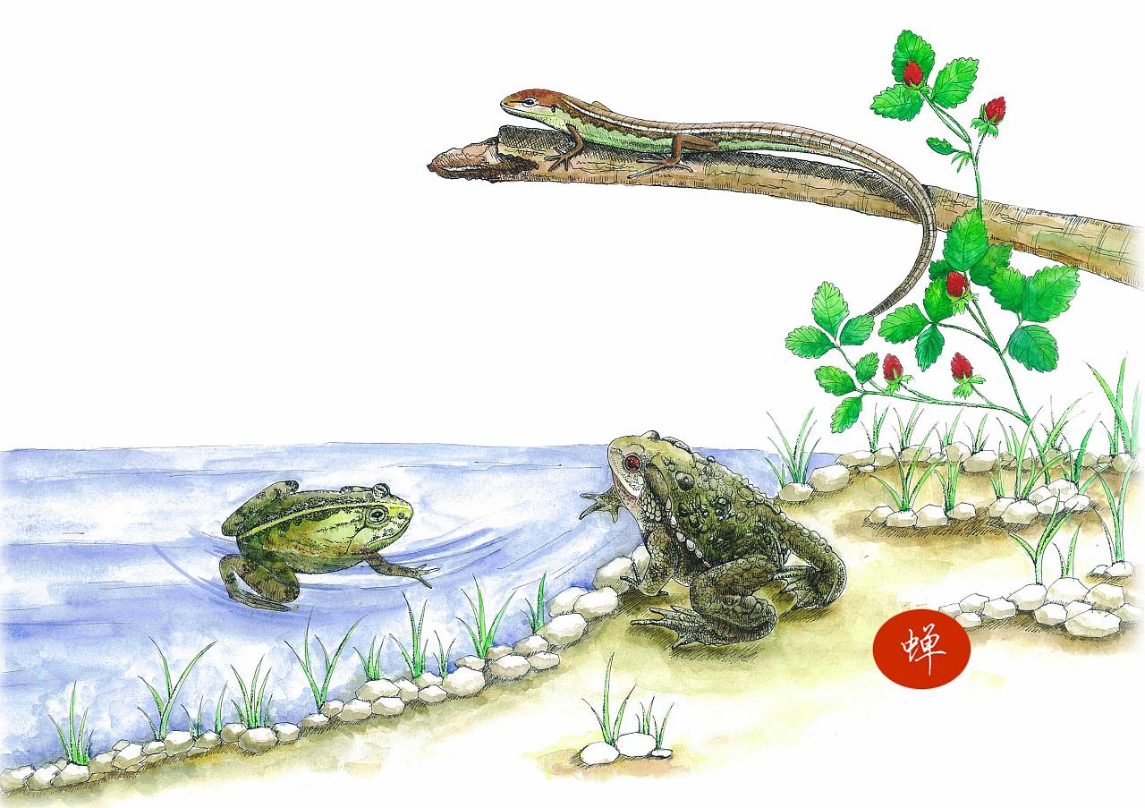 手绘水彩 动物