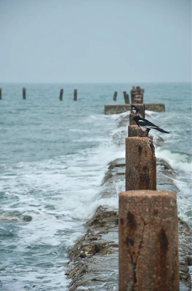 青岛海边随心拍
