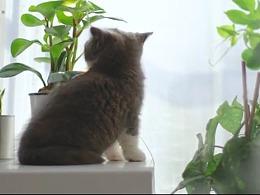 """""""猫片""""【三目摄影作品】"""