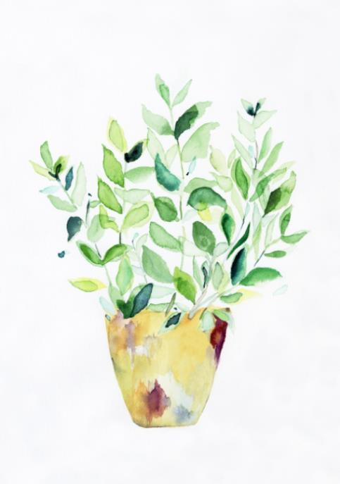 手绘水彩 小清新盆栽