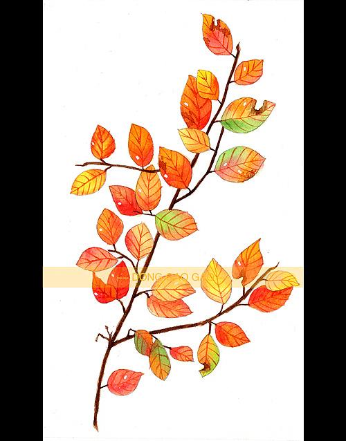 水彩画-各种叶子3图片