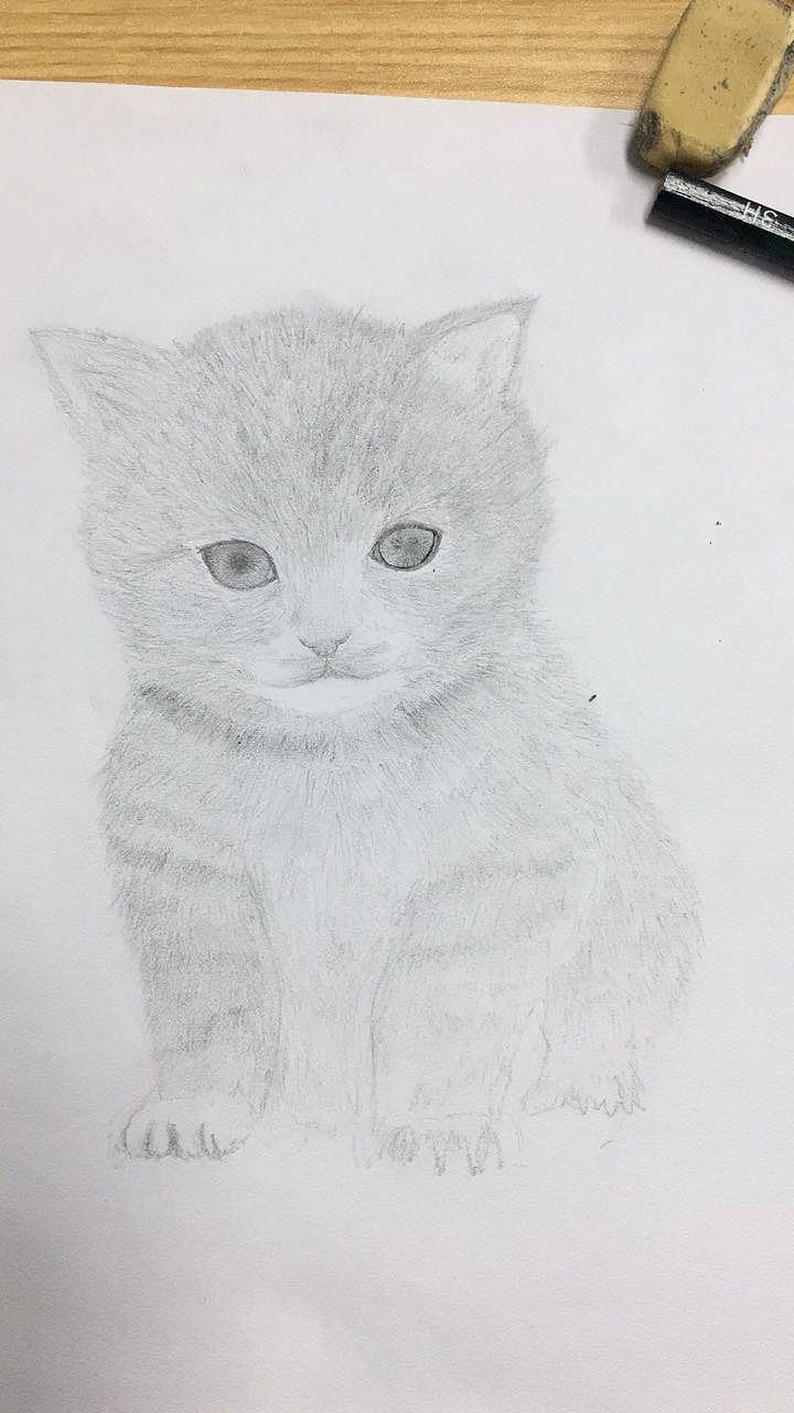 手绘小猫咪