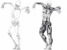 肌肉解剖练习