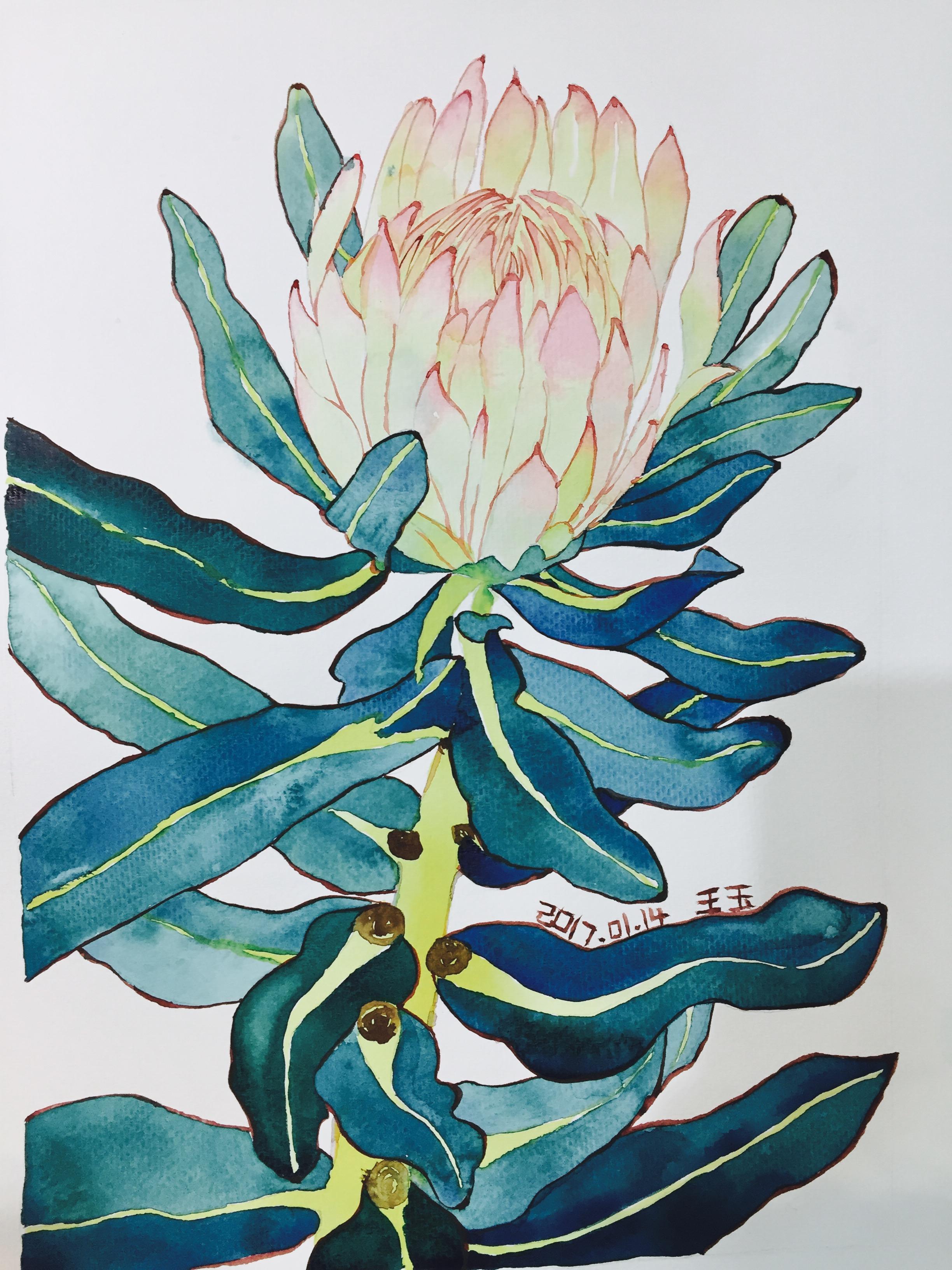 水彩[手绘]