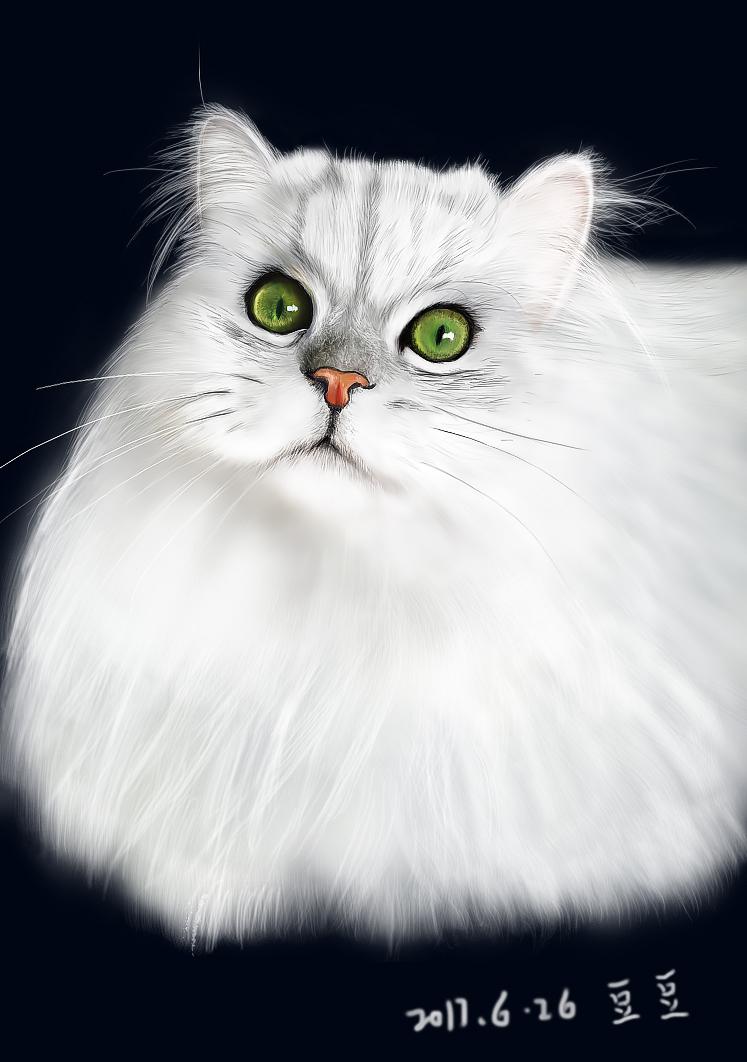 动物手绘 猫咪手绘   六七年不画画    画