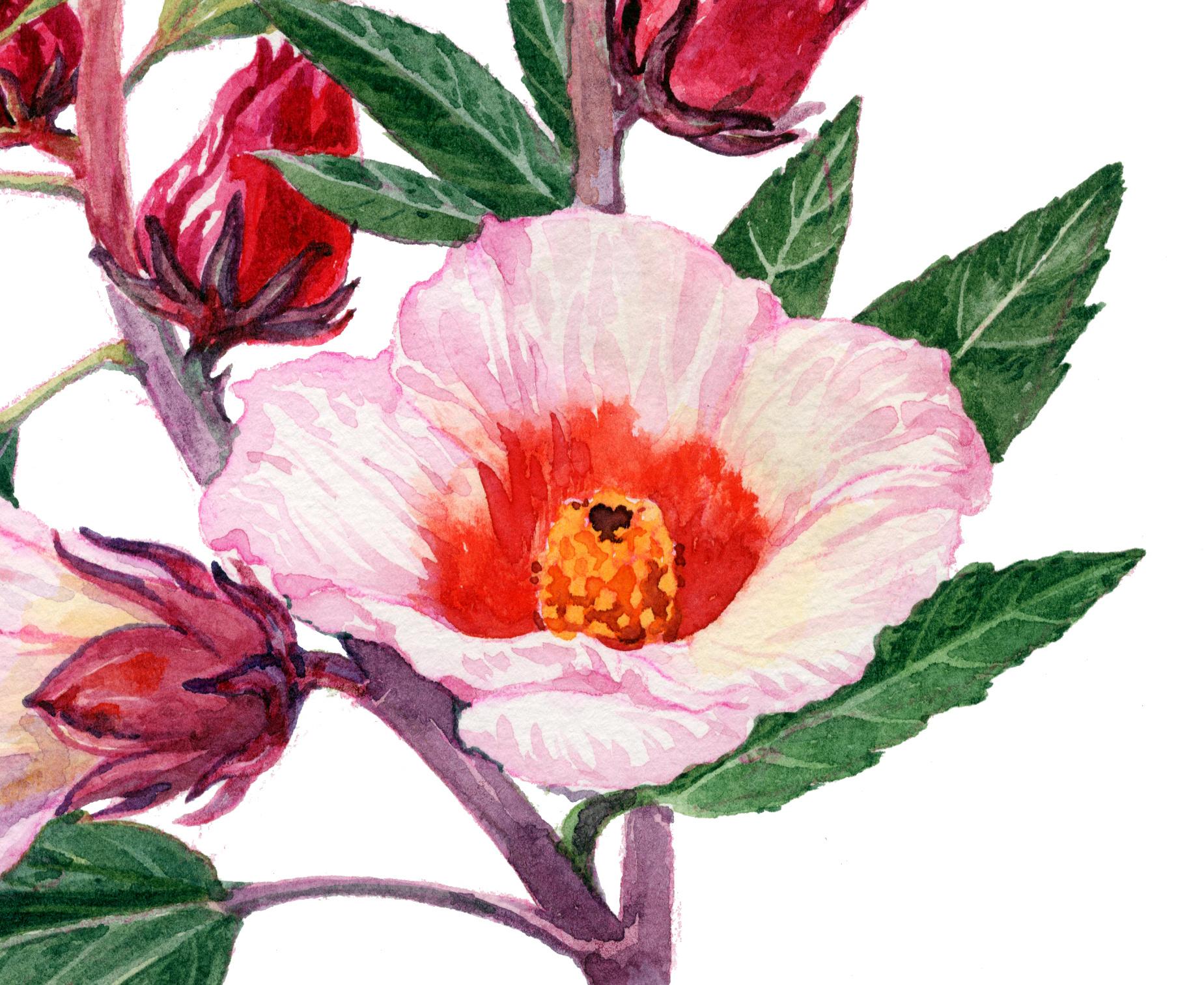 几种植物花卉的水彩画步骤图片