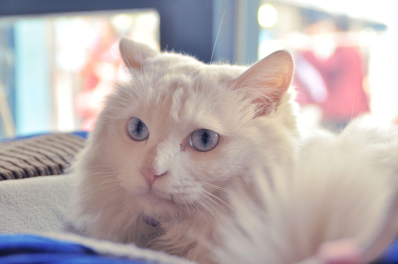 《 卡罗尔和她的猫》教学设计6,图片尺寸:685×515,来自网页:http图片