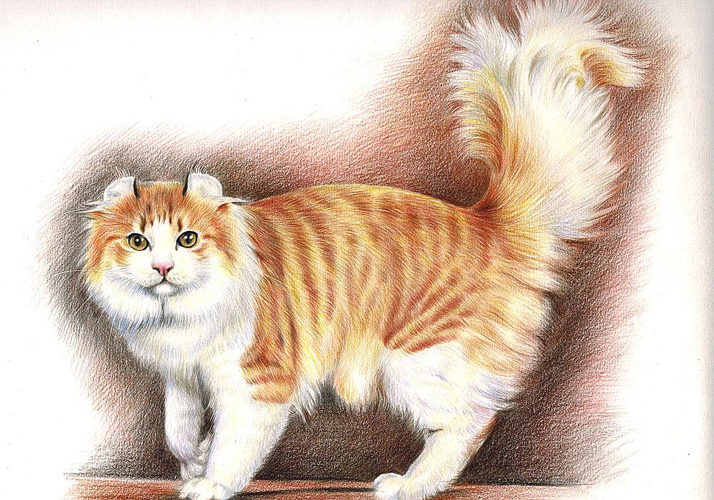 壁纸 动物 猫 猫咪 小猫 桌面 1000_701