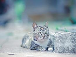 寻猫集32