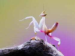 【虫】微距暂时告别一个段落 相约在下一个春天