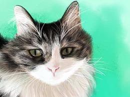 朋友的猫(^・ェ・^)