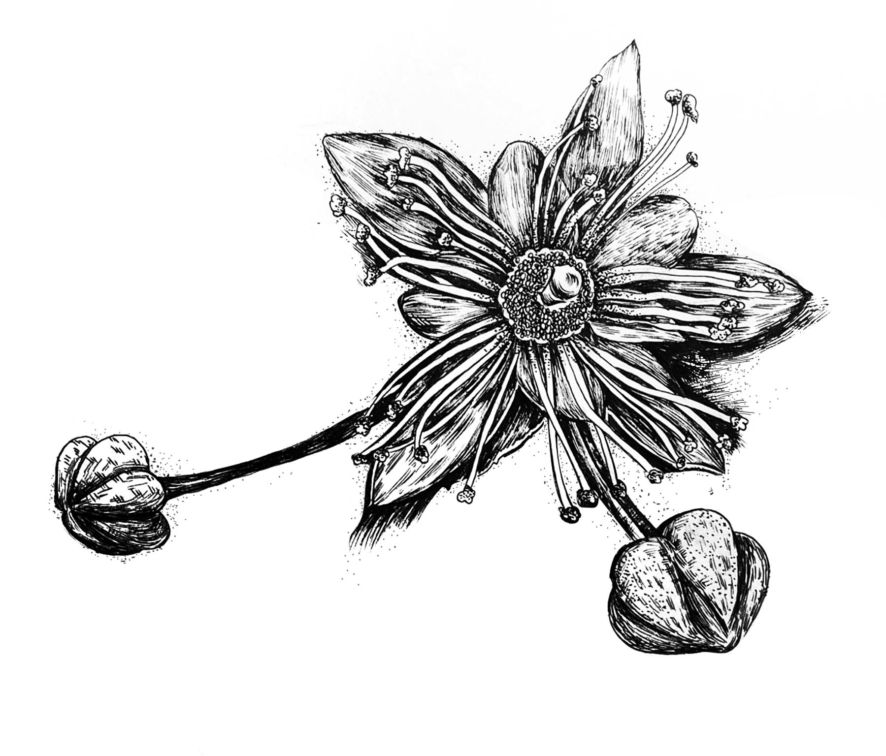 手绘植物系列