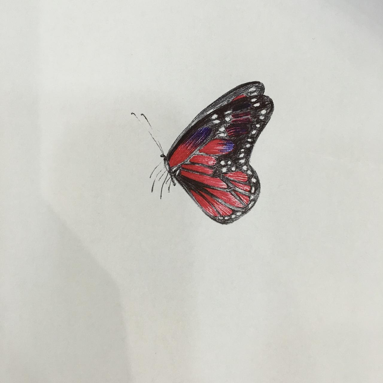 小蝴蝶图片 343375 1280x1280