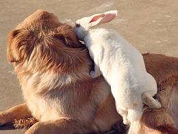 狗子忘忘 · 兔子说的悄悄话