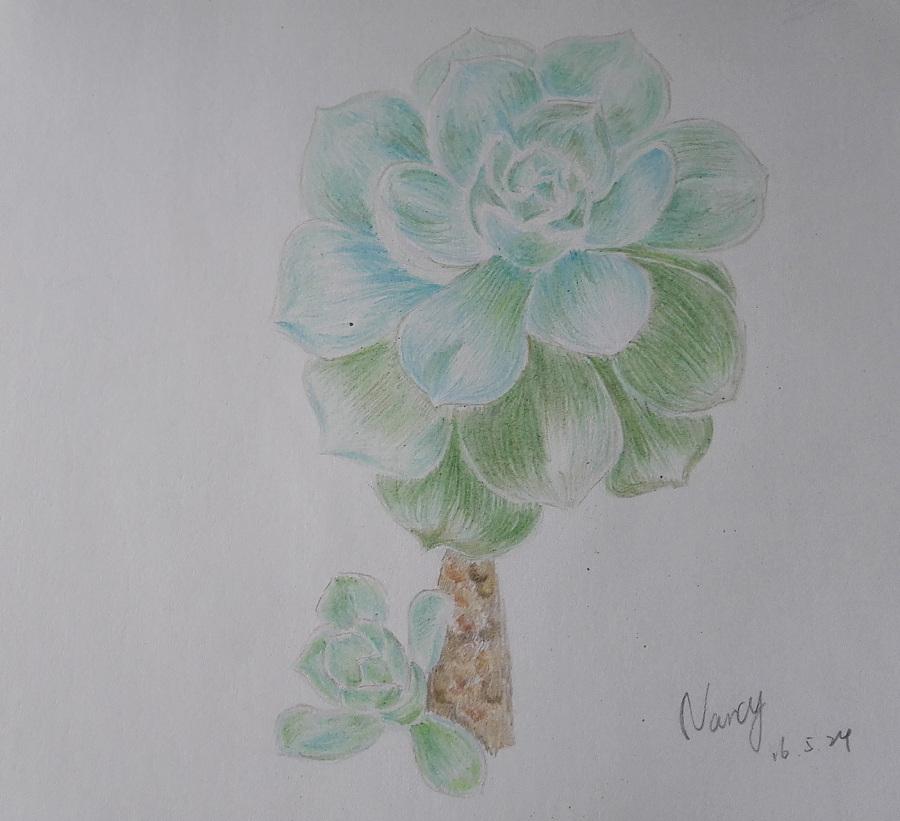 多肉植物|涂鸦/潮流|插画|nancywyc - 原创设计作品