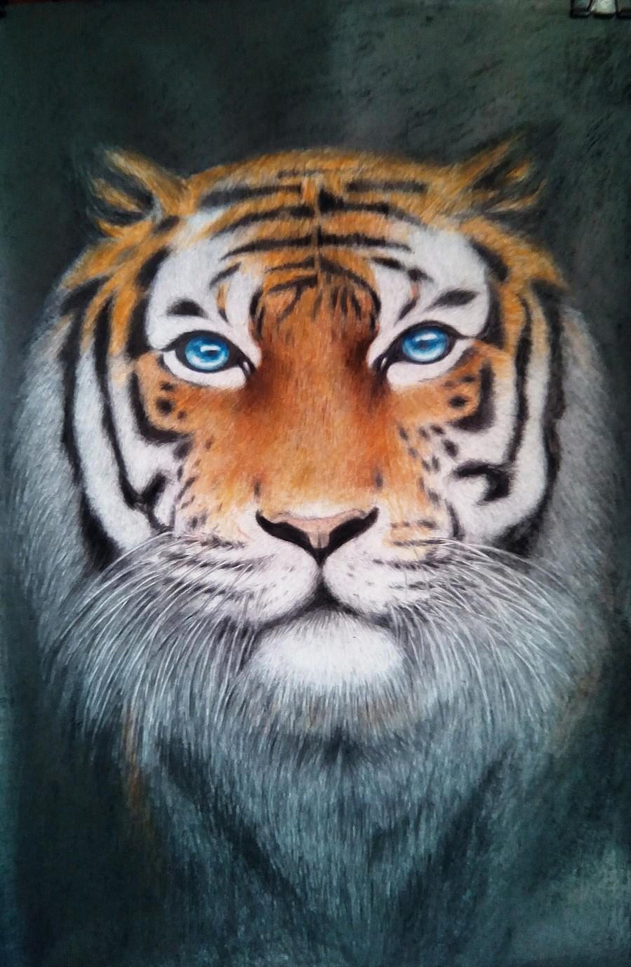手绘动物|彩铅|纯艺术|兰亭晚序