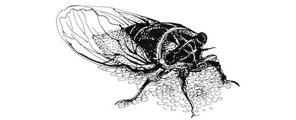 壁纸 简笔画 昆虫 手绘 线稿 桌面 596_242
