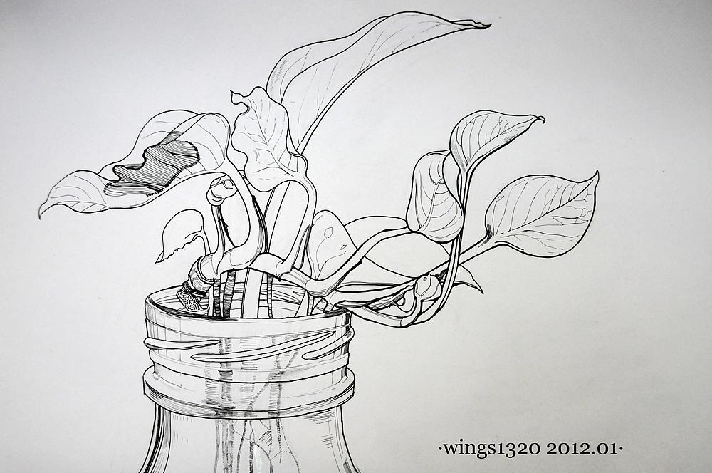 2张植物白描