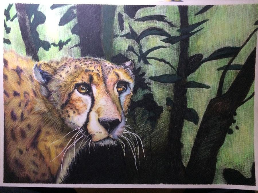 之前的一些猫科动物 雪豹 老虎 狞猫 猎豹