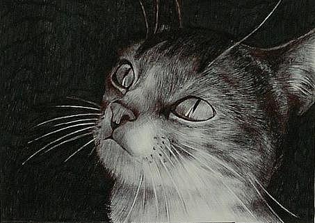 在头上黑色猫咪手绘