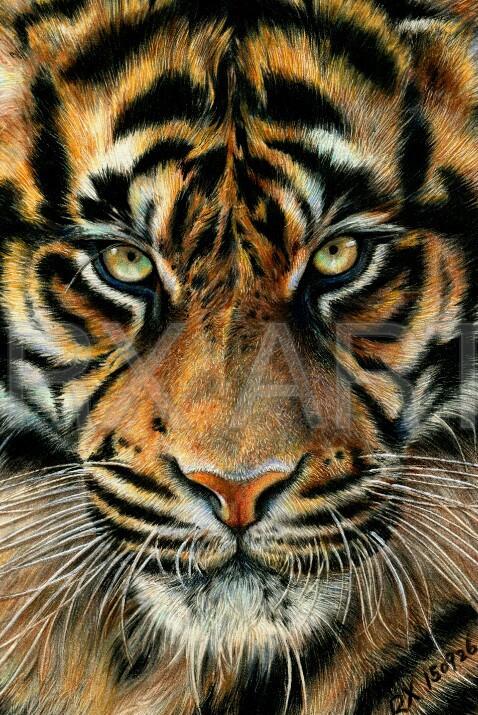 【彩铅动物】森林之王|彩铅|纯艺术|溶萱
