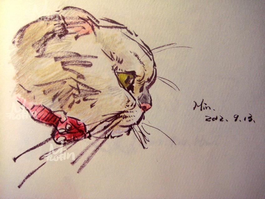 猫咪手绘随笔