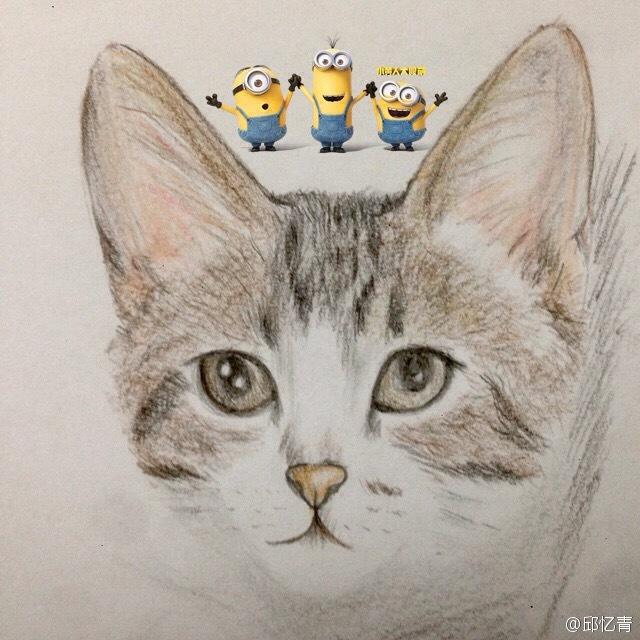 彩铅手绘喵星人——我家白哥|其他绘画|插画|mewxiao