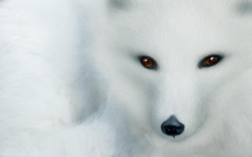 白狐钢琴曲谱 简谱