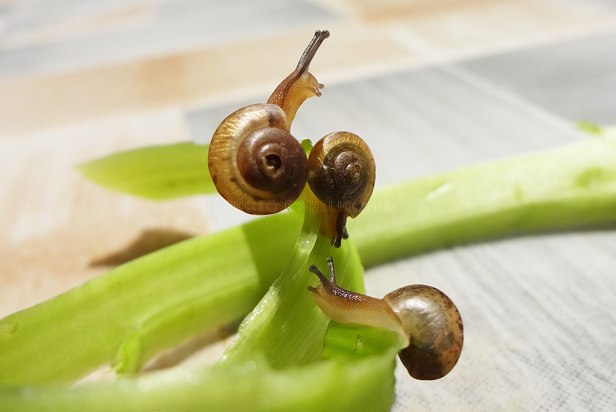 三只蜗牛思想记 v蜗牛 动物 蟹钳-原创作品-站酷奇遇有蚂蚁吗图片