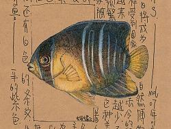 这个关于海鲜的插画手稿(三)