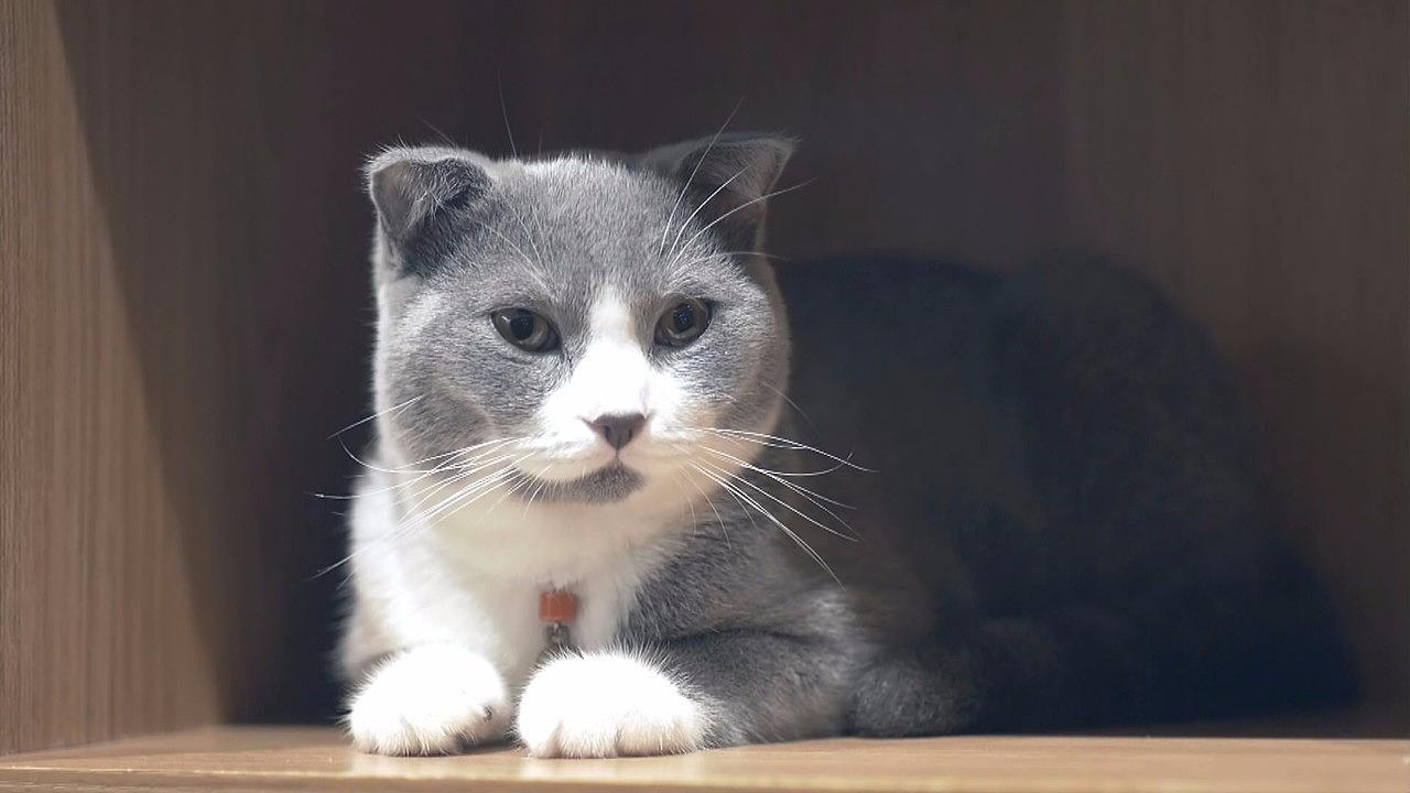 猫咪视频_猫咪影视magnet