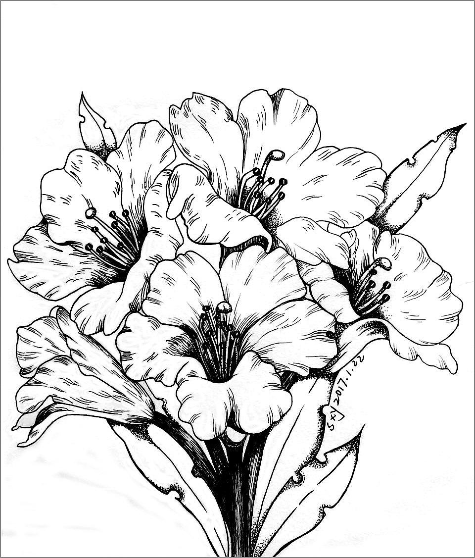 花物手绘线稿