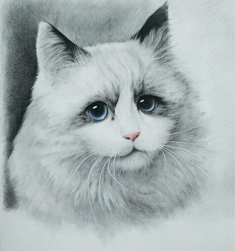 布偶猫 彩铅