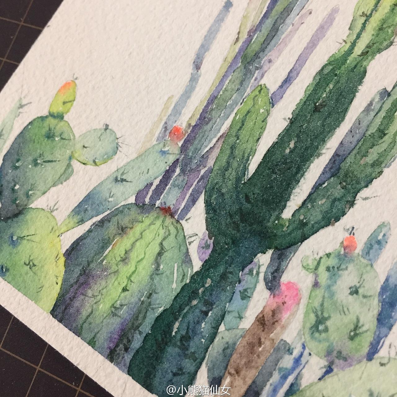 【小熊猫】水彩植物仙人掌手绘教